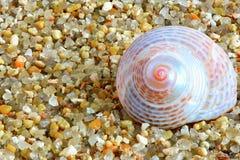 Shell photo libre de droits
