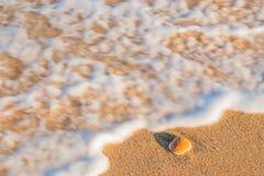 Shell Fotos de archivo libres de regalías