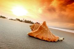 Shell. On sand under sunset sky Royalty Free Stock Images