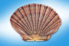 Shell. Sea shell on a blue background Royalty Free Stock Photography
