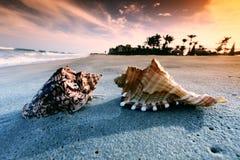 Shell. On sand under sunset sky Stock Photo