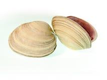 Shell photos libres de droits