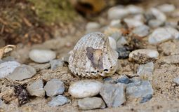 Shell Royaltyfria Bilder
