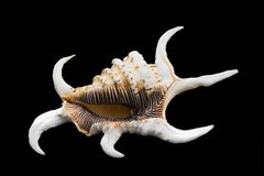 Shell Stockbild