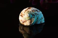Shell Στοκ φωτογραφία με δικαίωμα ελεύθερης χρήσης