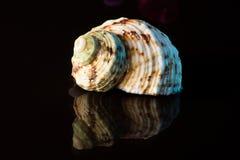Shell Στοκ εικόνες με δικαίωμα ελεύθερης χρήσης