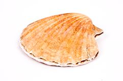 Shell Stock Photography