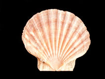 Shell stock image
