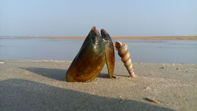 Shell Στοκ Φωτογραφία