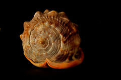 Shell photo stock