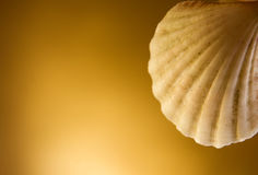 Shell. On a golden background royalty free stock images