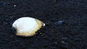 Shell Στοκ φωτογραφίες με δικαίωμα ελεύθερης χρήσης