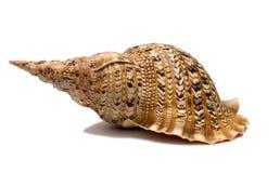 Shell aísla fotos de archivo libres de regalías