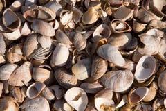 Shell Achtergrond Stock Fotografie