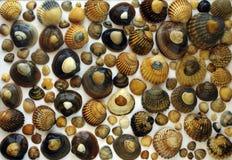 Shell Achtergrond royalty-vrije stock foto
