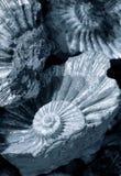 Shell achtergrond Royalty-vrije Stock Fotografie