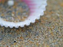 Shell adapta Foto de archivo libre de regalías