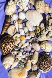Shell-affiche die shells en koralen van Masirah-Eiland, Oman, Indische Oceaan tonen stock foto