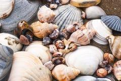 Shell akumulacja zdjęcia stock