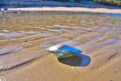 Shell alla spiaggia Fotografia Stock Libera da Diritti