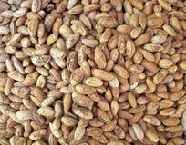 Shell almonds closeup Stock Photography