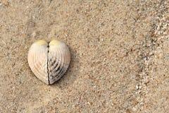Shell als hart Stock Foto