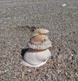 5 shell altos Imagem de Stock