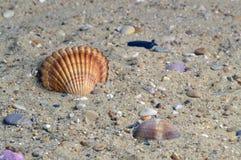 Shell amarelo Imagem de Stock