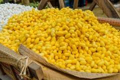 Shell amarelo do casulo do bicho-da-seda através da rota de seda Fotografia de Stock