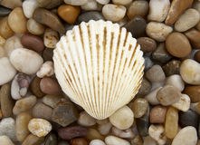 Free Shell And Stones 1 Royalty Free Stock Photography - 7577127