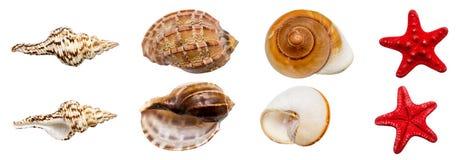 Shell-Ansammlung Lizenzfreie Stockfotos