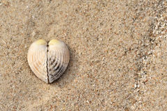 Shell as heart. A shell as heart on the beach Stock Photo