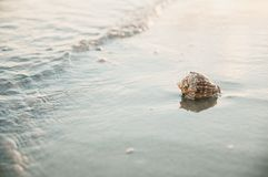 Shell ashore in waves. Of sea in sunset Stock Images
