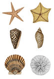 Shell Assortment 2 Royalty Free Stock Photo