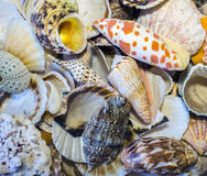 Shell assortment Royalty Free Stock Images