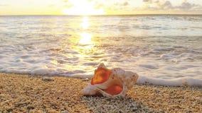 Shell au coucher du soleil Image stock