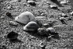 Shell auf dem Sand Stockbilder