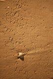 Shell auf dem Sand Stockfoto