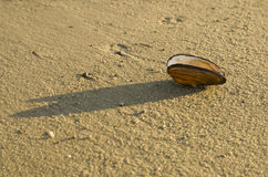 Shell auf dem Sand Lizenzfreies Stockbild
