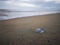 Shell auf dem Strand lizenzfreie stockfotografie