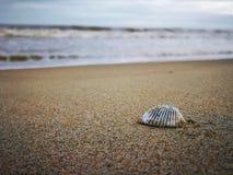 Shell auf dem Strand stockfoto