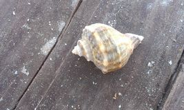 Shell auf dem Strand Lizenzfreies Stockbild