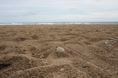 Shell auf dem Strand Lizenzfreie Stockbilder
