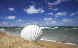 Shell auf dem Strand Stockfotografie