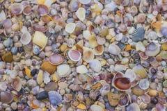 Shell auf dem Strand Stockbild
