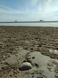 Shell auf dem Strand Lizenzfreies Stockfoto