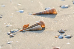Shell auf dem Strandhintergrund stockbilder