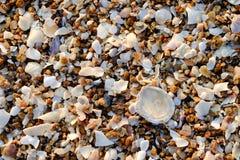 Shell auf der Küste Stockbild