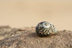 Shell auf einem Felsen Lizenzfreies Stockbild