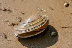 Shell auf einem See stützen unter Stockbild